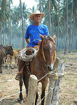 Mexican Rancher