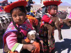 girls with lamas peru