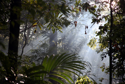 amazon jungle light