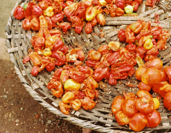 peppers in nigerian market
