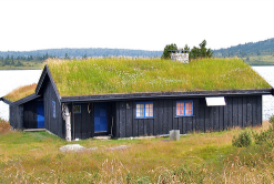norway grass roof